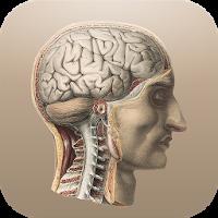 クラシック解剖学