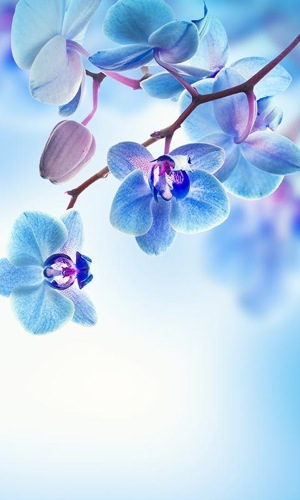 春の花ライブ壁紙