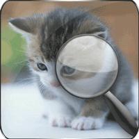 差猫を見つける
