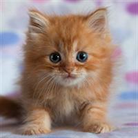かわいい子猫ライブ壁紙