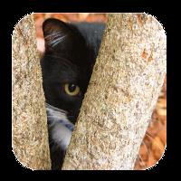 猫を見つける