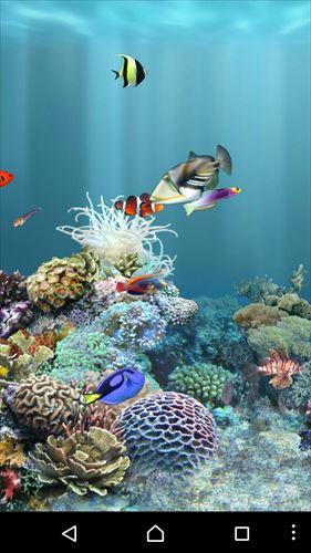 aniPet海洋水族館ライブ壁紙(無料版)