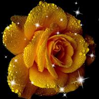 薔薇ライブ壁紙