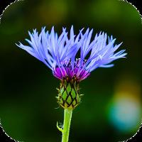 Blur Image – DSLR focus effect