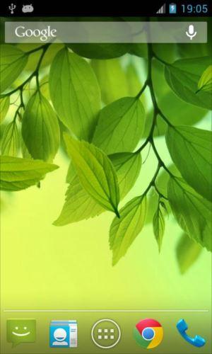 葉ライブ壁紙