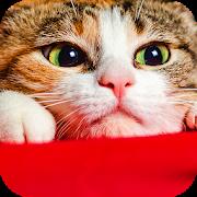 猫の可愛い壁紙