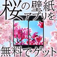 桜の壁紙アプリを無料でゲットしよう
