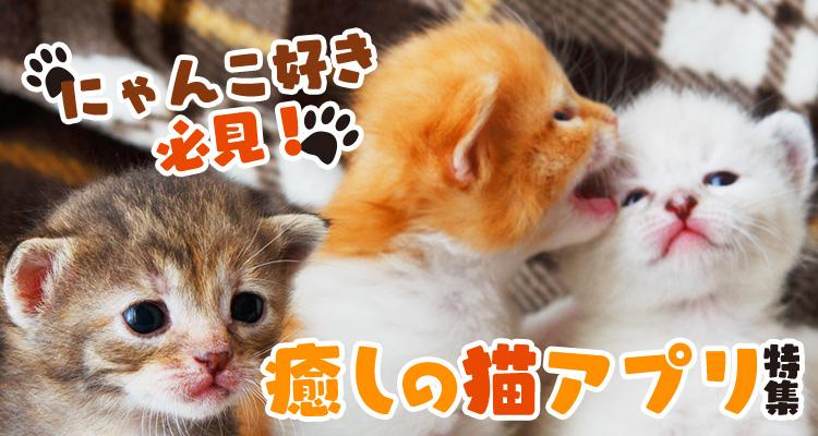 にゃんこ好き必見!癒しの猫アプリ特集