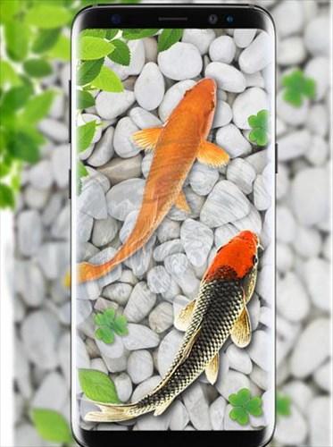 魚ライブ壁紙2018水族館コイ背景