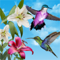鳥ライブ壁紙