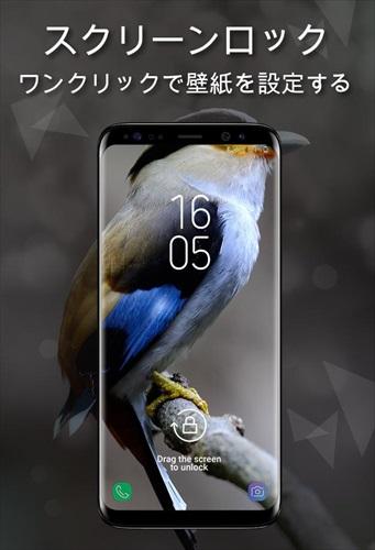 鳥の壁紙4K