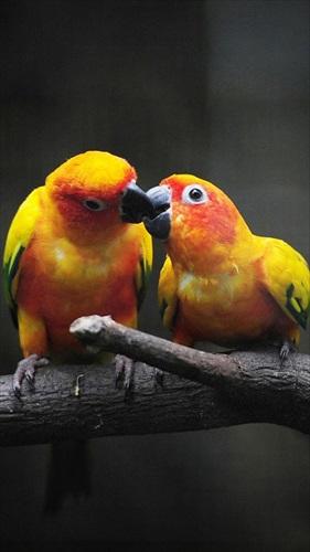 鳥ライブ壁紙–かわいい画像