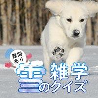 【難問あり】雪の雑学クイズ5問