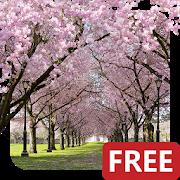 春の桜のライブ壁紙 Cherry Blossom Live Wallpaper FREE