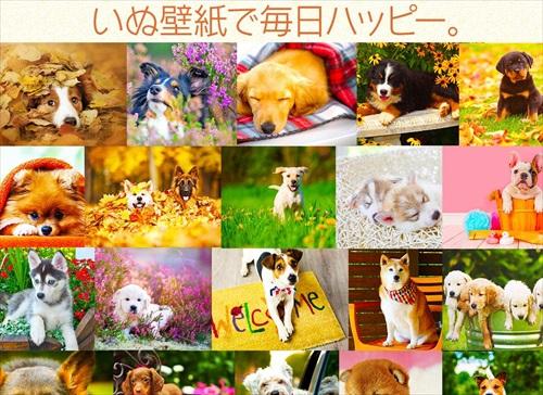 犬の可愛い壁紙