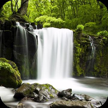 自然音–森を緩和