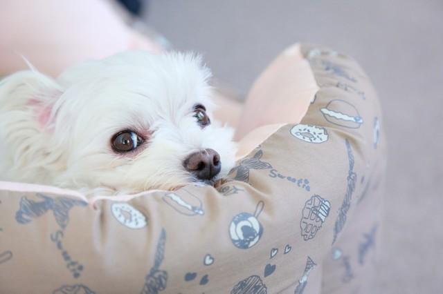 【楽天】ペット用ベッド5選!わんちゃんねこちゃんも快適な冷感タイプもおすすめ♪