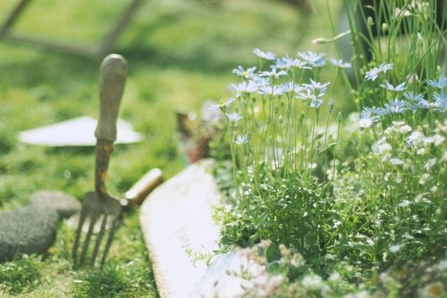 涼しくなってきた今こそ庭の片付けを!きれいをキープするお手入れ方法まとめ【家事百科 #9】