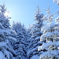冬の自然音 ~快適な睡眠のために~ リラックス睡眠アプリ