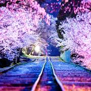 桜 ライブ壁紙