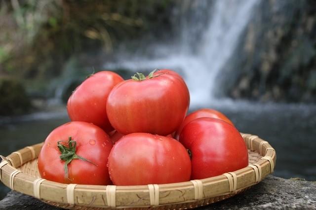 化学肥料は一切使っていません♡『昔懐かしい』香りのする喜界島トマト