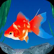 金魚育成アプリ「ポケット金魚」